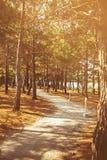 杉树公园 免版税图库摄影