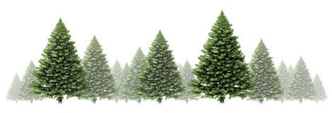 杉树冬天边界 免版税库存图片