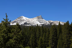 杉树前景独角兽峰顶蓝天 库存照片