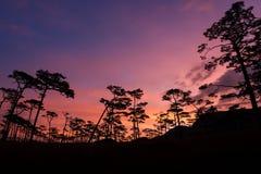 杉树剪影在日落的 免版税库存图片
