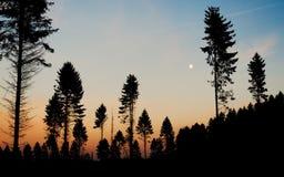 杉树剪影黄昏月亮 免版税库存照片