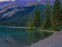 杉树和一个清楚的湖 免版税库存图片