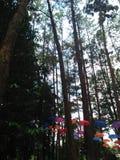 杉树和伞 免版税库存图片