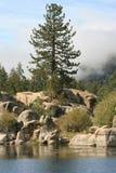 杉树和冰砾在Big Bear湖 免版税库存图片