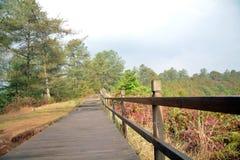 杉树和叶子有湿道路的 免版税库存图片