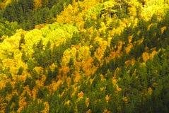 杉树和叶子 库存照片