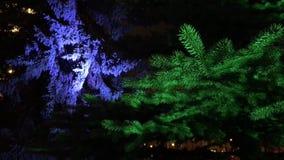 杉树圣诞树绿色分支  影视素材