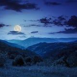 杉树在晚上临近在山的谷在山坡 免版税图库摄影