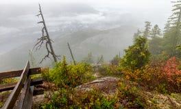 杉树在森林里,温哥华加拿大2016年10月 库存图片