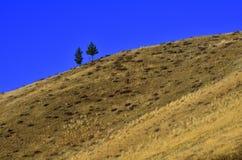 杉树小山上面 库存图片