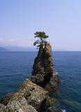 杉树岩石在意大利 库存图片