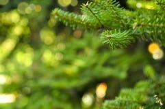 杉树早午餐特写镜头 与拷贝空间的抽象圣诞节背景 免版税库存照片