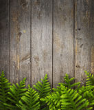 杉树木头背景 库存照片