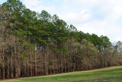 杉树树带界线 库存图片