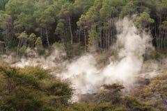 杉树森林在罗托路亚 免版税库存照片