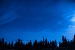 杉树森林在蓝色黑暗的夜空下 免版税库存图片