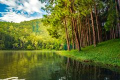 杉树森林场面和湖农村场面自然背景 免版税图库摄影