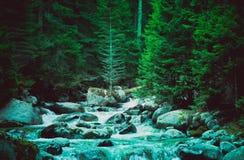 杉树森林河流经岩石 美好的powerf 免版税库存图片