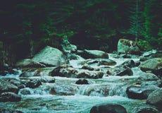 杉树森林河流经岩石 美好的powerf 库存照片