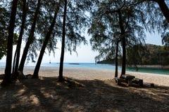 杉树海滩 库存照片
