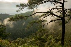 杉树照片在山的与雾 库存图片