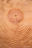 杉树的圆环 库存图片