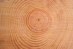 杉树的圆环 免版税图库摄影