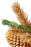 杉树的枝杈。 免版税图库摄影