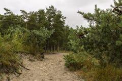 杉树的边缘 免版税库存照片