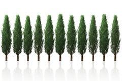 杉树行隔绝了3D图表的例证 库存图片