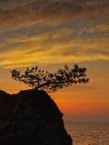 杉树,日落,海3 免版税库存图片