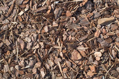 从杉树,自然纹理的新鲜的湿木片 免版税库存照片