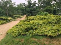 杉树, ilford,伦敦,自然, 库存图片