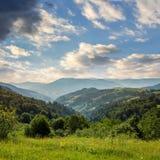 杉树临近在山的谷在山坡在天空下与 免版税库存图片
