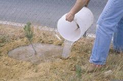 洛杉矶保护军团的干净&绿色环境小组的成员给成员种植的树幼木喝水 免版税库存照片