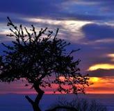 洋李树荫在五颜六色的天空的在日出 图库摄影