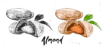 杏仁坚果手拉的剪影在单色和五颜六色的 详细的铭刻的食物图画 免版税库存图片