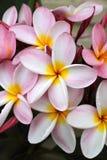 杏仁奶油饼粉红色 图库摄影