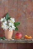 杏子和花 图库摄影