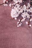 杏子开花的分支在织品的 库存图片