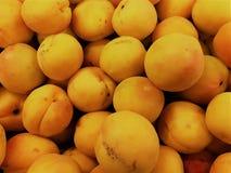 杏子果子在新西兰 库存照片