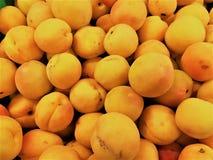 杏子果子在新西兰 免版税库存照片