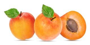 杏子查出的白色 库存图片