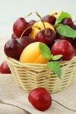 杏子浆果樱桃成熟混合的李子 免版税库存照片