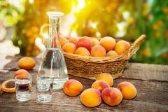 杏子用在小玻璃的杏子白兰地酒 免版税库存图片