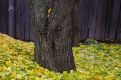 杏子的粉碎的叶子 免版税图库摄影