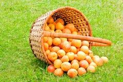 杏子篮子 库存照片
