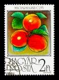 杏子,果子serie,大约1986年 免版税图库摄影