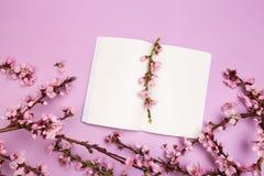 杏树的笔记本和小树枝的嘲笑与花的在淡色背景 他春天的概念来了,复活节快乐 库存图片