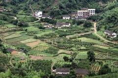 村庄和果树园 库存图片
